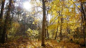 步行在秋天森林里 影视素材