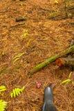 步行在秋天森林,从看在towar下的上面的看法 免版税图库摄影