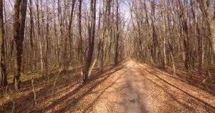 步行在落叶秋天森林里 股票视频