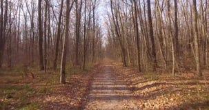 步行在落叶秋天森林里