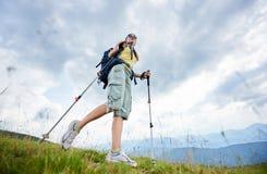 步行在象草的小山,佩带的背包的妇女远足者,使用在山的迁徙的棍子 免版税库存图片