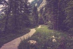 步行在Hallstatt,奥地利,欧洲深森林里  库存照片