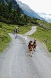 步行在Krimml Achental谷的人们 库存照片