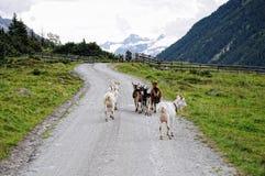 步行在Krimml Achental谷的人们 库存图片