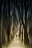 步行在l神秘的森林 免版税库存照片
