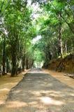 步行方式通过森林 免版税库存图片