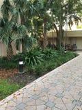 步行方式道路棕榈树 图库摄影
