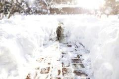 步行沿着向下巷道的猫在飞雪期间 美丽的概念礼服女孩纵向佩带的空白冬天 库存图片