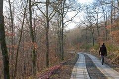 步行沿着向下欧洲森林的人在秋天 免版税库存图片