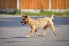 步行沿着向下街道的狗 免版税库存图片