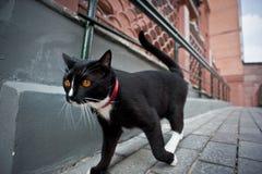 步行沿着向下街道的猫 库存照片