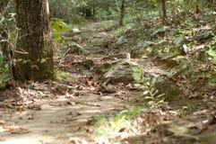 步行沿着向下足迹 库存图片