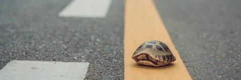 步行沿着向下跑的一条轨道的乌龟在赛跑或有的概念目标,无论很多时间它花费横幅,长的forma 图库摄影