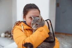 步行的苏格兰平直的猫在冬天 库存图片