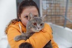 步行的苏格兰平直的猫在冬天 免版税库存照片