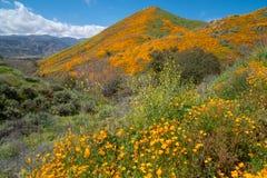 步行者峡谷在湖埃尔西诺加利福尼亚,盖在野花 库存照片