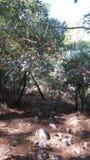 步行者树在森林里 免版税库存图片