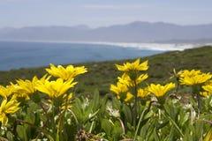 步行者海湾自然保护 免版税库存图片