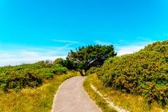 步行胡同在一个城市公园在海边镇,绿色vegetat 免版税图库摄影