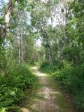 步行通过一个树木繁茂区 库存图片