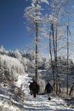 步行通过冬天森林 库存照片