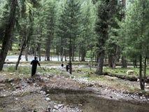 步行通过厚实的绿色森林 免版税库存照片