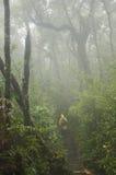 步行通过有薄雾的森林 库存照片