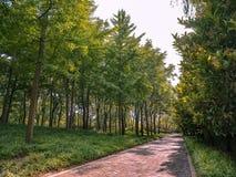步行通过森林 库存图片