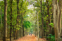 步行通过路在森林 免版税库存照片