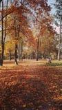 步行通过automn公园 库存照片