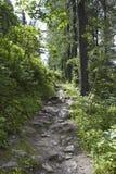 步行道穿过自然 免版税库存照片
