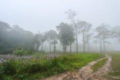步行道路在早晨薄雾森林里 免版税库存照片