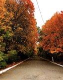 步行道路在秋天公园 免版税库存图片
