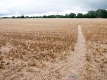 步行道路穿过被收获的庄稼领域英国夏天阴云密布 库存照片