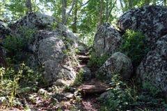 步通过一张岩石通行证在森林里 免版税库存照片