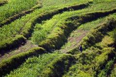 步骤种田 免版税图库摄影