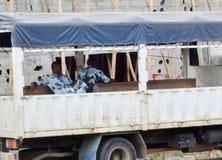 武装的警察干预困难在CÃ'te d ` Ivoire的 免版税图库摄影
