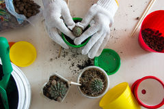 武装罐顶视图的仙人掌植物 图库摄影