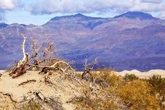 死亡沙丘平面的豆科灌木国家公园谷 库存照片