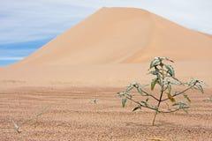 死亡沙丘谷 免版税库存照片
