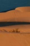 死亡沙丘豆科灌木国家公园沙子谷 免版税库存图片