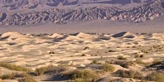 死亡沙丘豆科灌木沙子谷 免版税库存照片