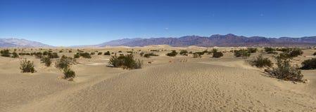 死亡沙漠沙丘平面的豆科灌木沙子谷 图库摄影
