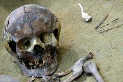 死亡的概念和发掘、考古学和科学研究 一块人的头骨和骨头的遗骸在沙子 关闭 免版税库存照片
