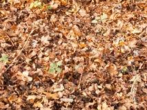 死变褐下落的秋叶背景纹理地面 免版税库存图片