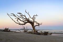 死木吹在风 图库摄影