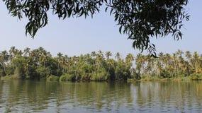 死水和椰子种植园绿色自然 免版税图库摄影