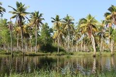 死水和椰子种植园美丽自然 库存图片