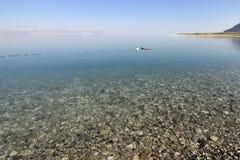死海海滩。 库存图片