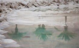 死海盐石头和三棵棕榈树的水晶和反射在死海的 以色列 图库摄影